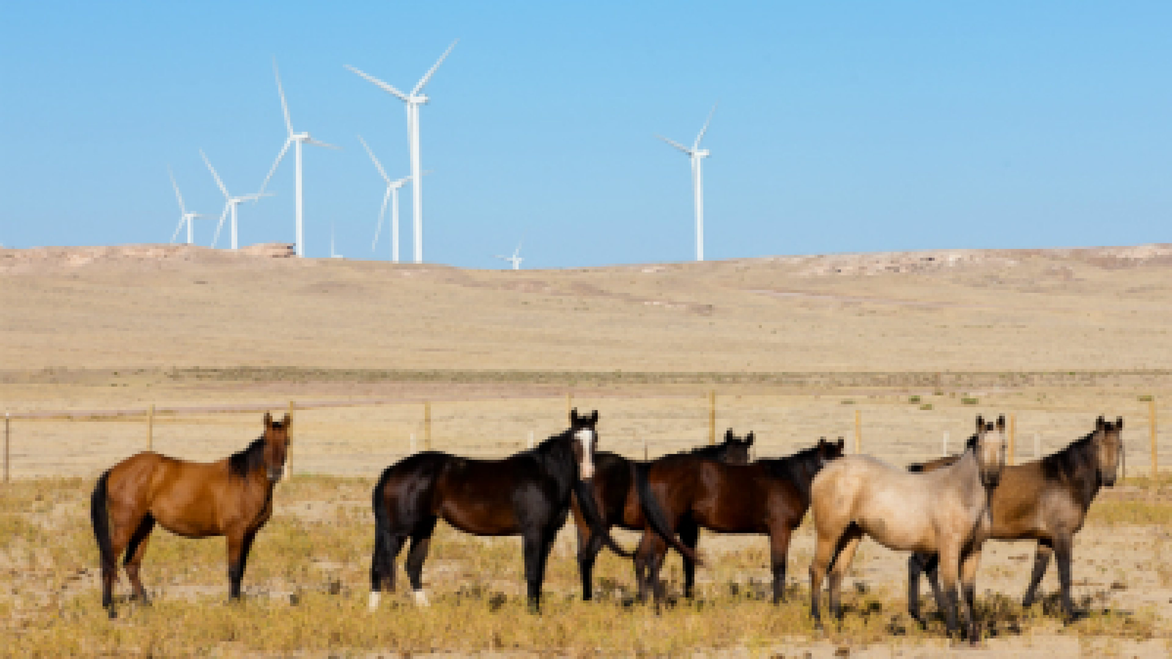 Wind turbines and horses