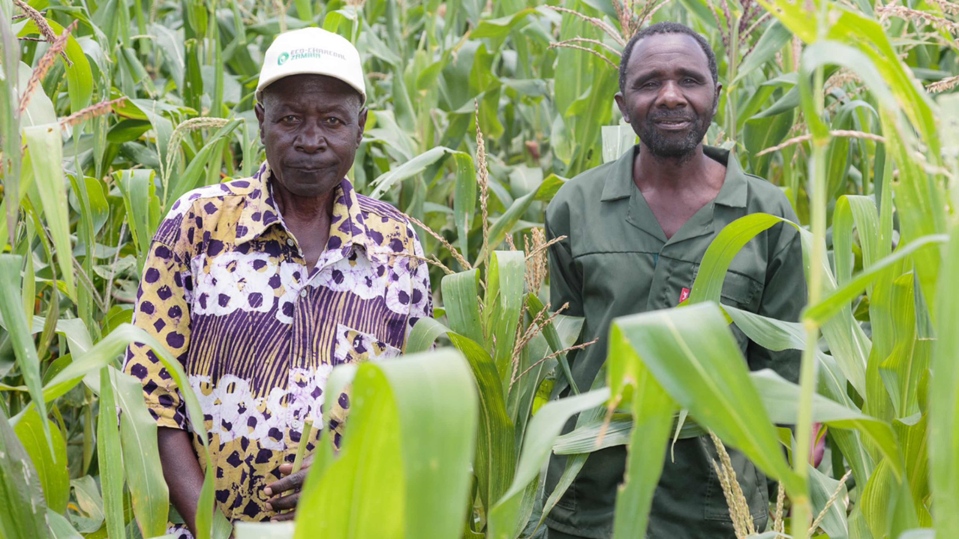 Lower Zambezi REDD+ Project is helping farmers with improved conservation farming practices